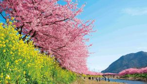 Watch Japan Blossom