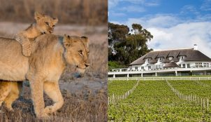 Winelands & Wildlife